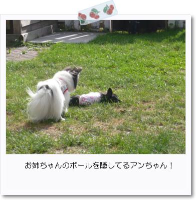 [photo20082767]image 加工