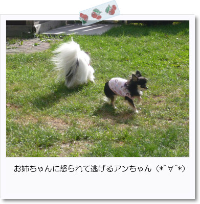 [photo20082999]image 加工