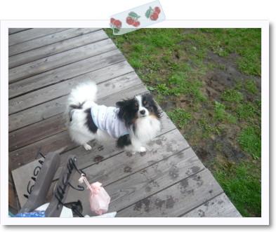 [photo10200982]image 加工