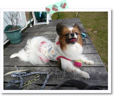 [photo24201287]image 加工