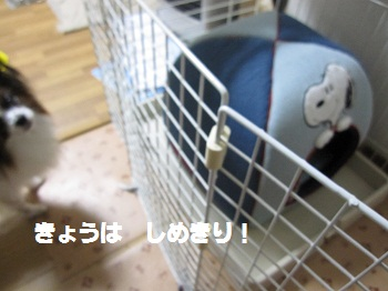 003-2_20111017154644.jpg