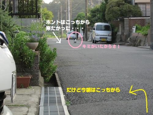 012-2_20110811093110.jpg