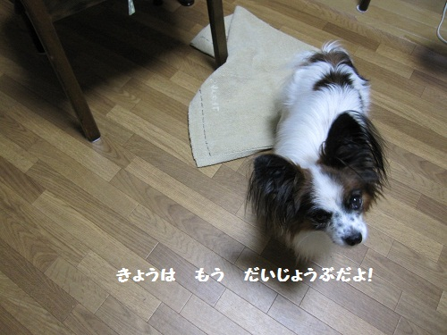 012-2_20111007215045.jpg