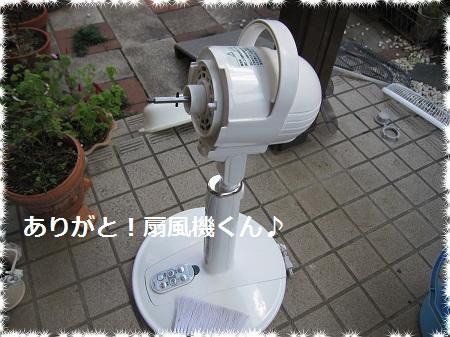 015-2_20110930130320.jpg