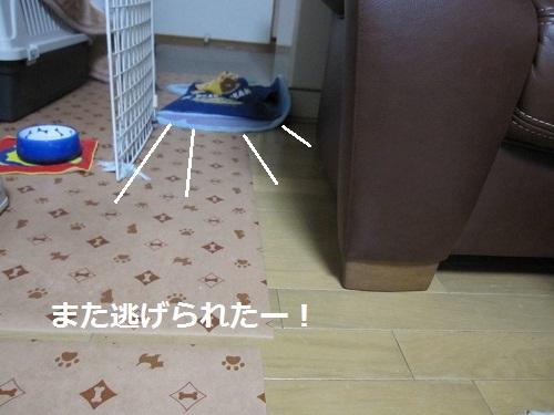 015-3_20111015182625.jpg