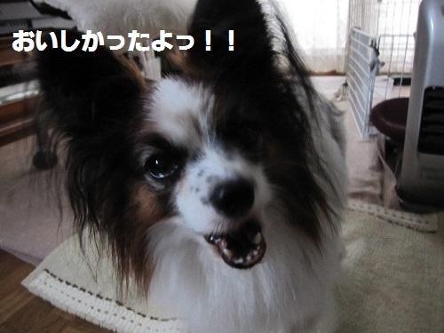 016-2_20111103175815.jpg