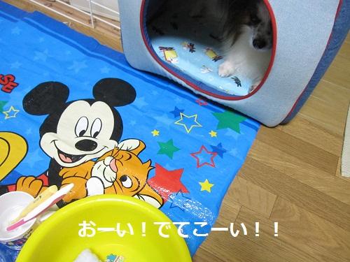 024-2_20111015182750.jpg