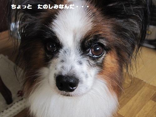 025-2_20111023213746.jpg