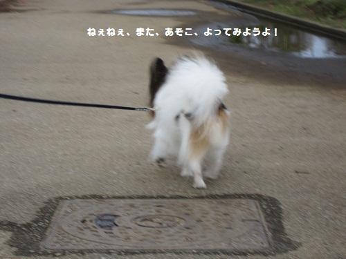 056-2_20111101174913.jpg