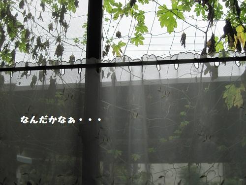 083-3_20110827144451.jpg