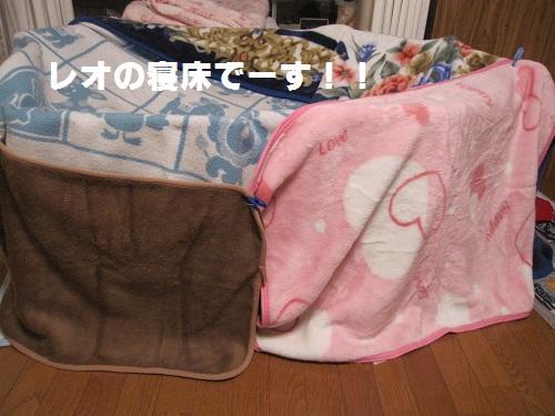 173-2_20111124224027.jpg