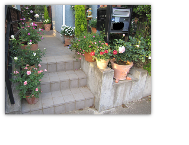 バラの庭2