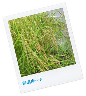 新潟のお米2-2
