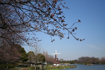 桜 まだ咲いてない。