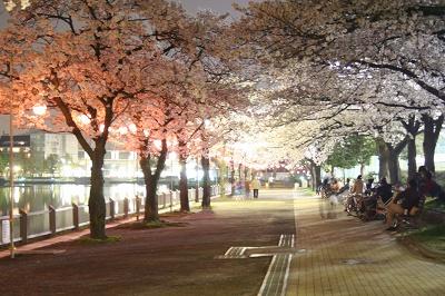 夜桜★★★