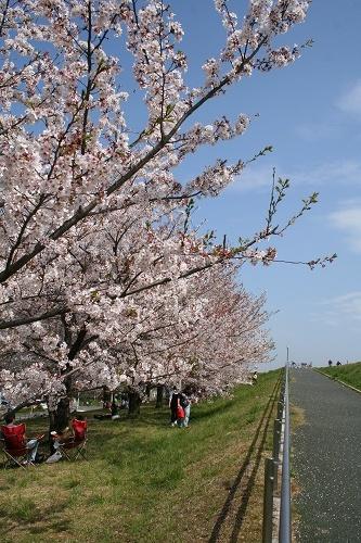 青い空 桜