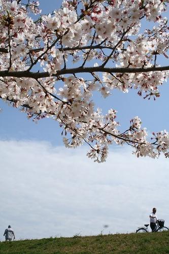 青い空と桜