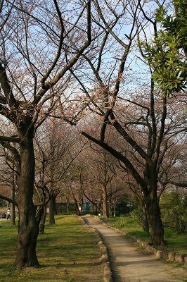 来週は桜満開かな★