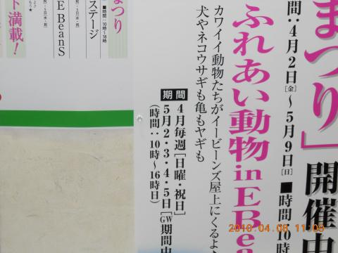仙台eBeans_ネコウサギ2