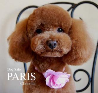 120204+chocolat+b s