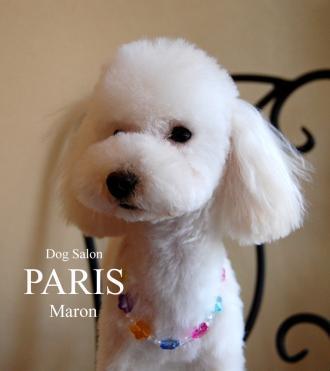 maronn120119ab_convert_20120121155559.jpg