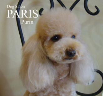 purin+120301S.jpg