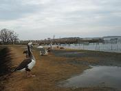 20100227うなぎ (2)
