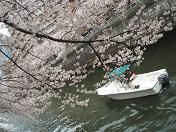 20100404お花見 (1)