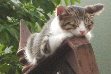 20100619銀座猫 (1)