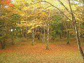 20101024軽井沢 (1)