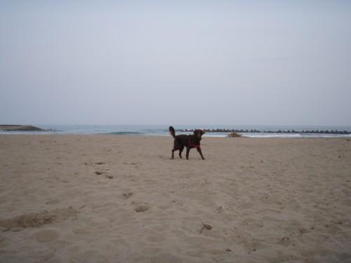 浜辺だよーー