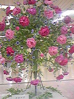 100502バラの花