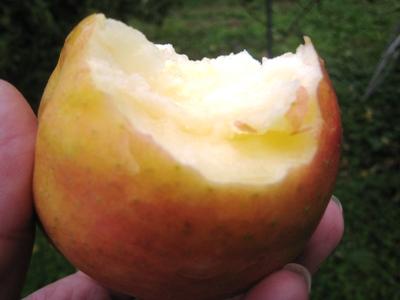 エデンのリンゴ