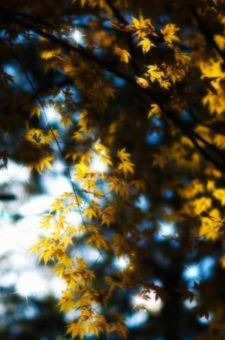star_leaf.jpg