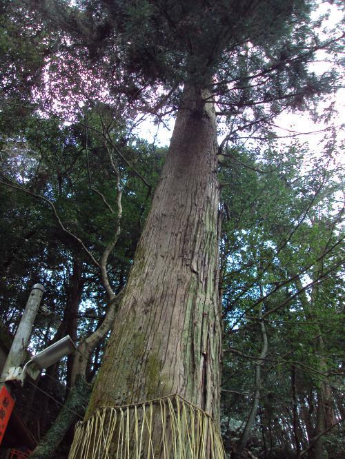 fushimi+inari+tree_convert_20100330205903.jpg