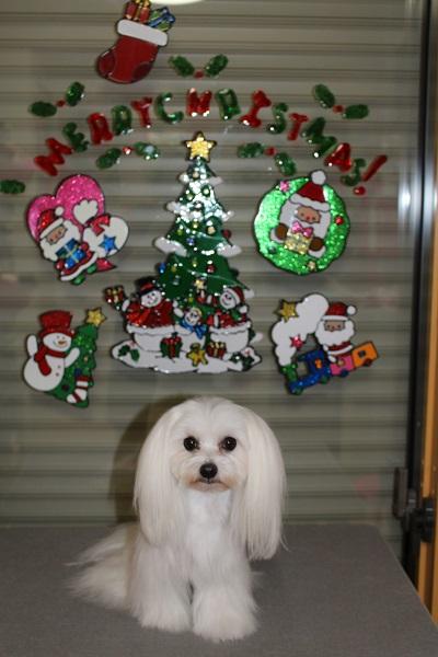 2014.11.19 クリスマスの飾り付け☆-1