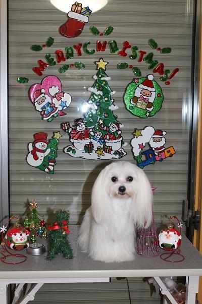 2014.11.19 クリスマスの飾り付け☆-2