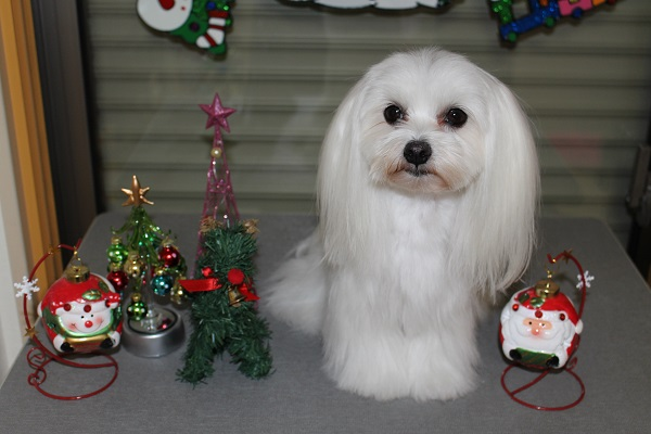2014.11.19 クリスマスの飾り付け☆-5