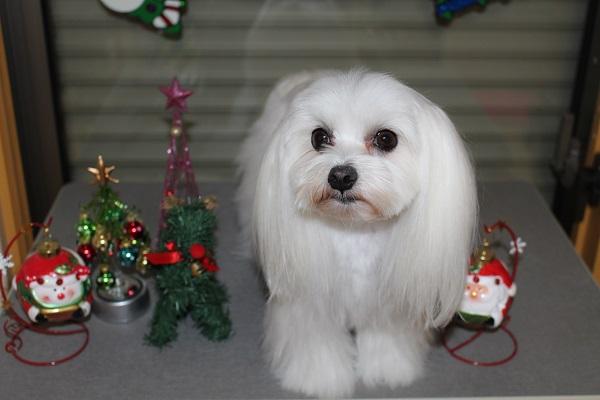2014.11.19 クリスマスの飾り付け☆-6