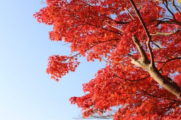 2014.11.27 紅葉狩り②-9
