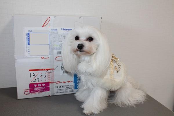 2014.12.25 メリークリスマス☆彡-6