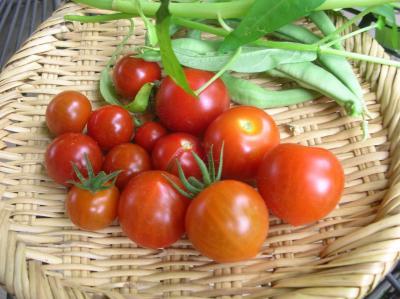 crops from garden