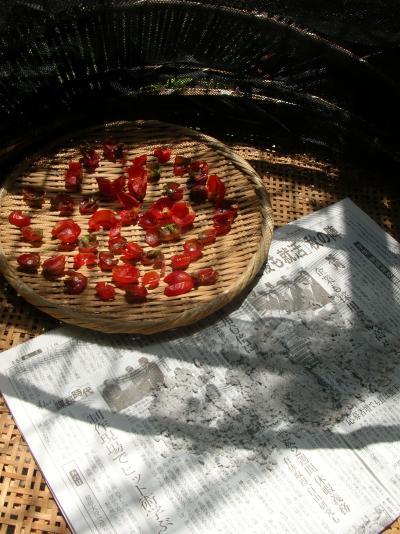 ドライトマト&シーソルト