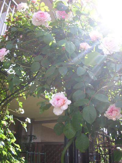 roses2010.jpg