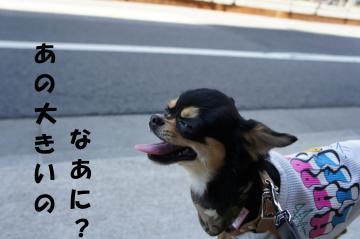 縺セ縺励◆_convert_20110714213521