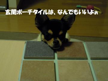 DSCN0699_convert_20111129221631.jpg