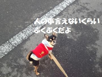 IMG_0149_.jpg