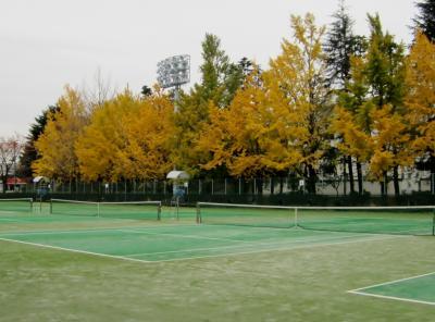 銀杏の色づくテニスコート