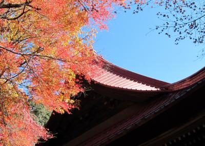 奥武蔵トレイルラン 高幡不動尊の紅葉