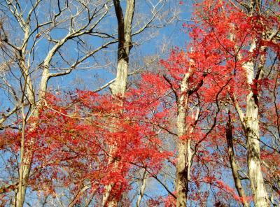 奥武蔵トレイルラン 素敵な紅葉1